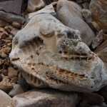 Fossils; East Stuart Island, ON