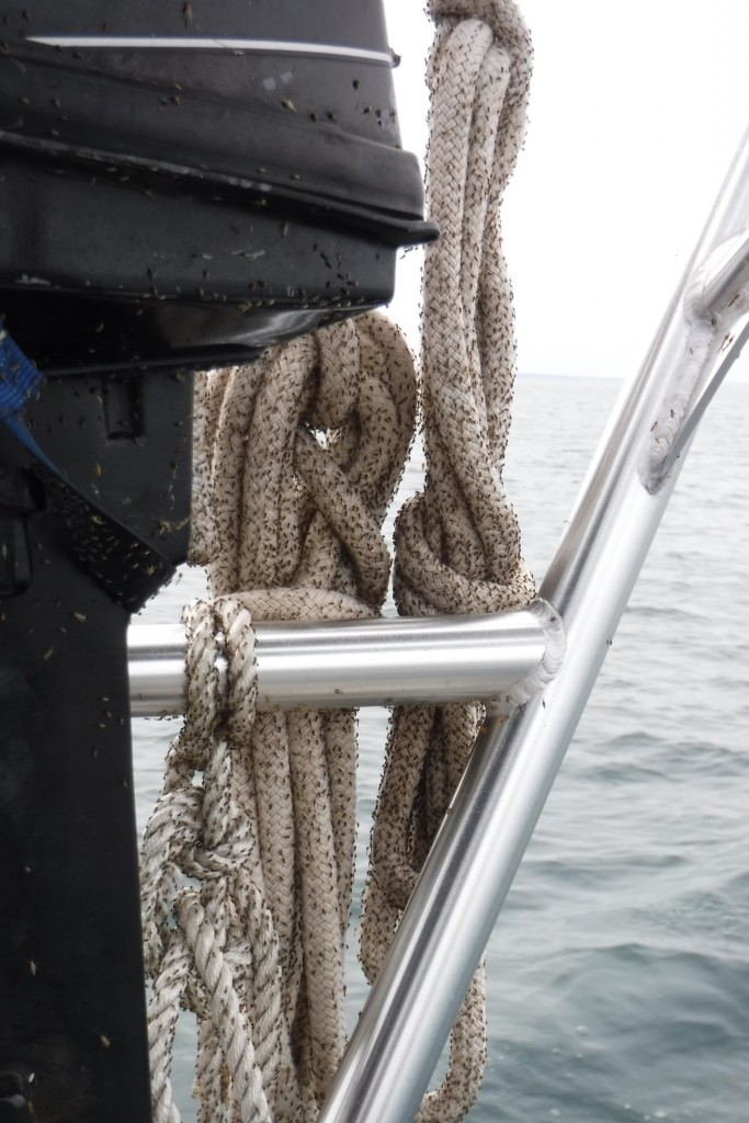 Lake Erie's revenge on humanity for years of pollution: these little gnats have been covering our whole boat