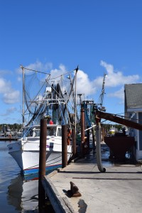 Shrimp boats unloading at the end of our dock