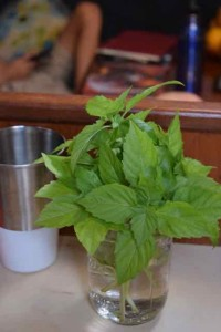 Hey, look-fresh basil! The sail loft at Shelter Bay keeps an herb garden, open to cruisers. This is the first fresh herb I've seen in six months.