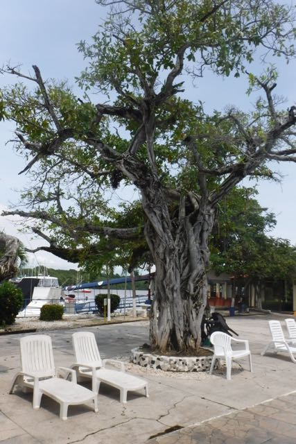 One of the beautiful trees at the yacht club. Despite dwindling resources, the landscaping around here is still pretty striking.