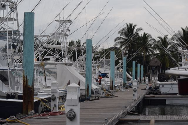 The dock in Puerto Quetzal. Each of these fishing boats has three guys to keep it spotless, regardless if it's going out on charter. Walking down the pier is like walking through a frat house.
