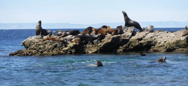 I know, you guys from California are not interested in sea lions, but...these are the first pinnipeds we've seen on our whole trip!