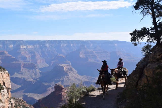 Donkeys coming down the Bright Angel trail