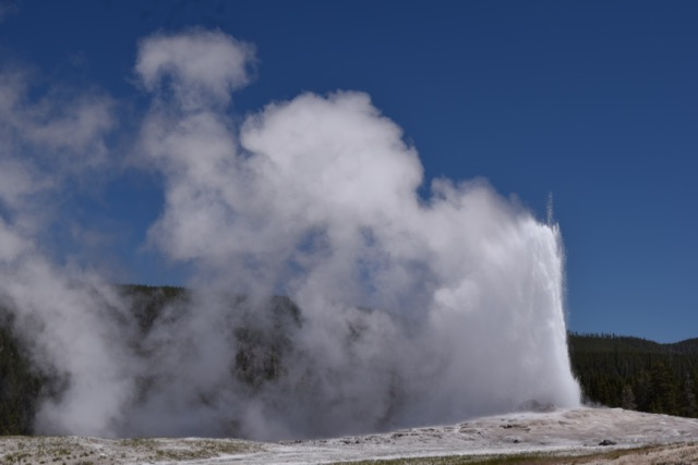 Old Faithful on a windy day.