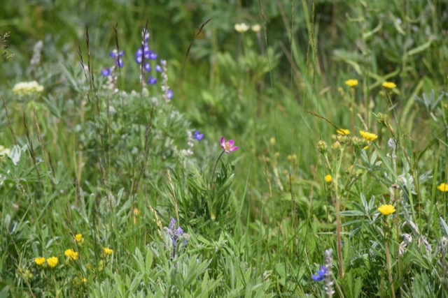 Turns out, we've been missing wildflowers
